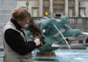 Trafalgar Square – og duerne